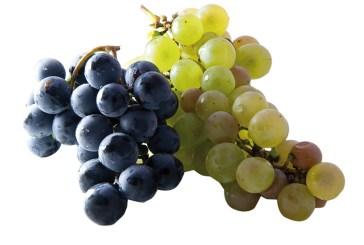 Ottima la qualità dell'uva