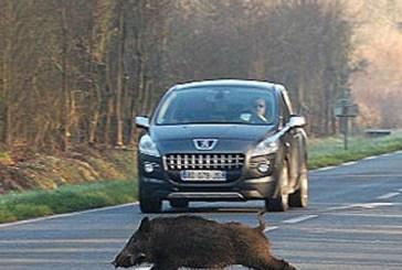 Troppi danni da fauna selvatica, Cia Chieti-Pescara chiede interventi alla Regione