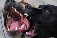 Fossacesia, donna aggredita da due cani