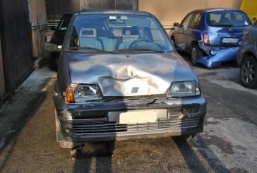 Un cinghiale mi ha distrutto l'auto...e nessuno mi risarcisce