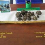 Chieti: sequestro tartufi