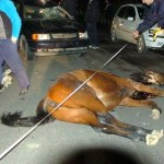 incidente-cavalli-2