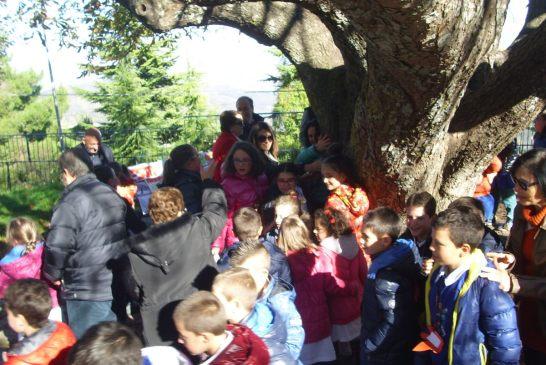 festa albero-liscia-4