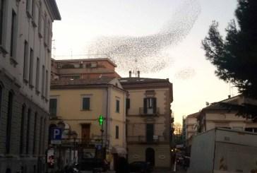 Vasto: guano di volatili, situazioni di pericolo in viale D'Annunzio e al cimitero