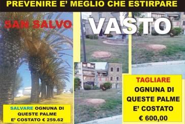 Taglio delle palme, il Movimento 5 Stelle Vasto contro l'Amministrazione comunale