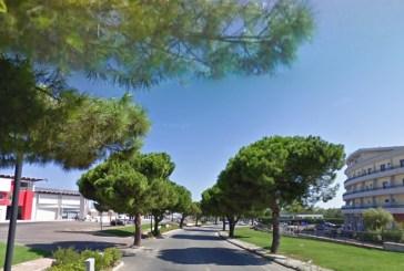 Pericolosi gli alberi su via Pertini a San Salvo, si procede con l'abbattimento