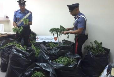 Coltivava marijuana nell'orto dietro casa, Carabinieri arrestano 53enne di Ortona