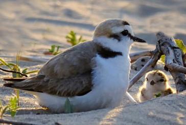 Il WWF invia una diffida al Comune di Vasto sui lavori di livellamento della spiaggia
