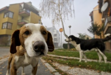 Cani randagi sulla Circonvallazione Histoniense, il problema è serio
