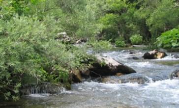 Nel Trigno boro triplicato e acque di olive