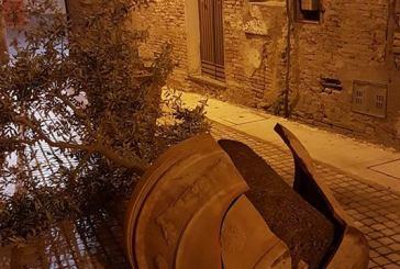 I vandali tornano in centro, abbattuta una pianta d'ulivo