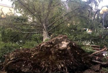 Forti raffiche di vento, cade un albero nella Villa Comunale di Montenero