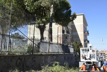 San Salvo, iniziata la potatura degli alberi