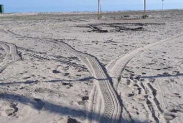 Auto in spiaggia, danni alle dune del fratino