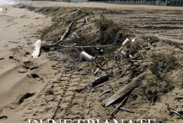 Tornano le ruspe, dune spianate e nidi di fratino distrutti