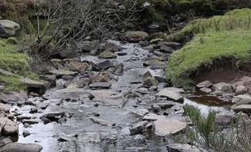 Salmonella nel torrente Cena, controlli nel fiume