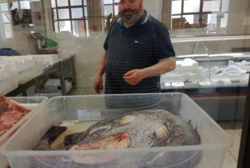 Catturata rana pescatrice di 18 chili