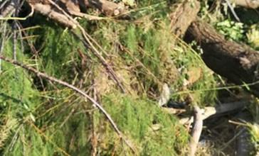 Altri trenta alberi abbattuti, blitz dei carabinieri forestali