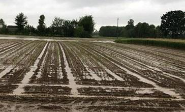 Maltempo, in ginocchio tutto il settore agricolo