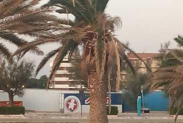 """""""Moria delle palme a San Salvo Marina, l'amministrazione dica cosa vuol fare"""""""