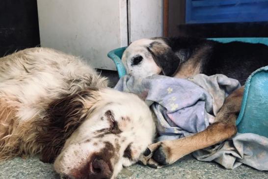 Cani abbandonati 2