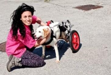 Adottato Leon, il cane paralizzato: andrà a Cremona