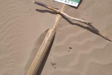 Alle dune di Vasto paletti di protezione abbattuti e corda segata