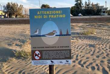 A San Salvo un'area riservata alla nidificazione del Fratino