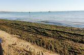 Alghe sulla spiaggia di San Salvo Marina, a lavoro la ditta incaricata alla pulizia