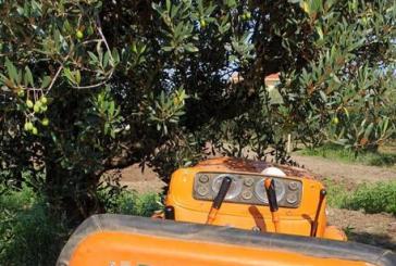 Schiacciato fra trattore e rami di ulivo, muore 49enne