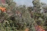 Incendi nel Vastese, il rogo è partito per la cottura della salsa di pomodoro. Denunciate 6 persone