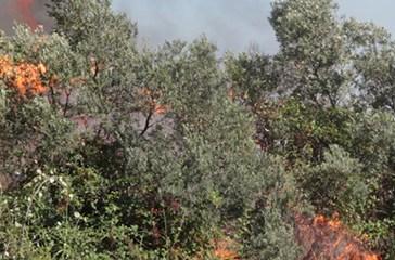 Incendio tra Vasto Sud e Termoli, chiuso il tratto dell'A14