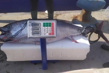 Un tonno rosso pescato illegalmente e sequestrato è stato donato dalla Capitaneria di porto e dalla Guardia Costiera di Ortona alla Caritas