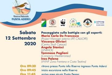 Domani a Punta Penna iniziativa per ricordare lo spiaggiamento dei capodogli
