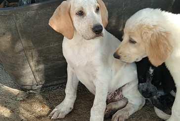 Vasto, sei cuccioli abbandonati davanti al cancello del canile