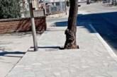 Cemento al posto delle buche degli alberi, Menna: