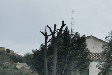 Vasto, alberi tagliati fuori periodo. Sputore: