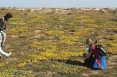 La primavera a Punta Aderci: dopo il fuoco una rigogliosa fioritura