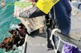 Pescatori di ricci di mare fermati e sanzionati