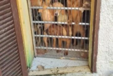 Convive con 40 cani in 50 mq per allevarli, denunciato