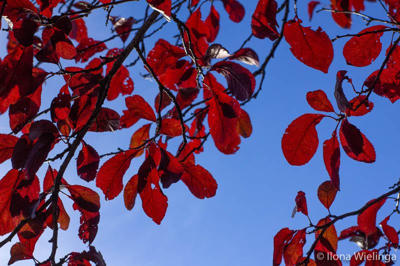 herfst 8