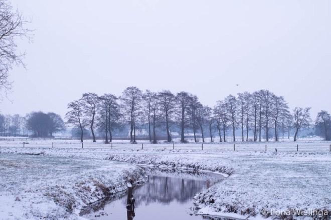 sneeuw 4 koude plaatjes