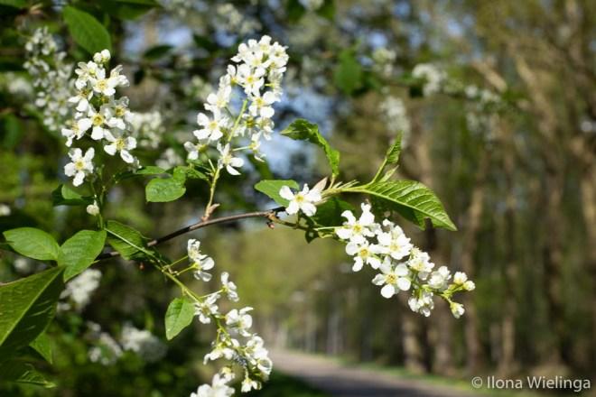 lente 7 bloemen