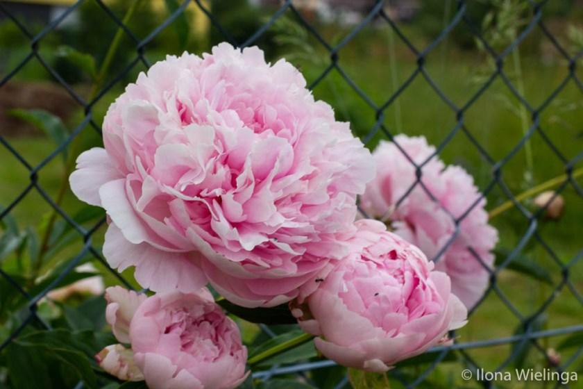 grenzen 1 macro bloemen