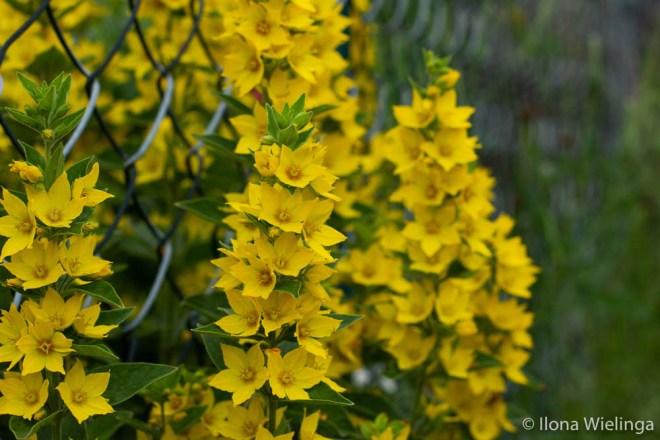 grenzen 2 macro bloemen