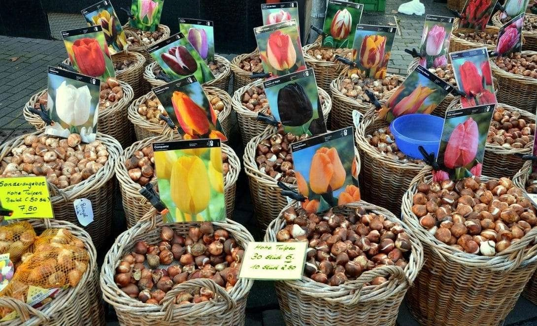 10 Quick Tips On How To Shop For Flower Bulbs