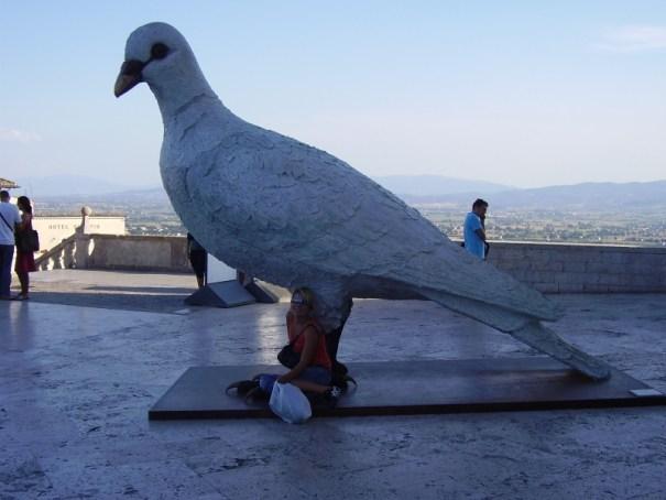 holubice míru Assisi
