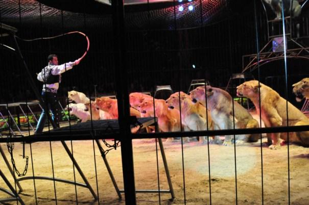 cirkus medrano