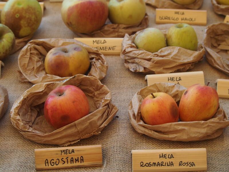 jablka expo