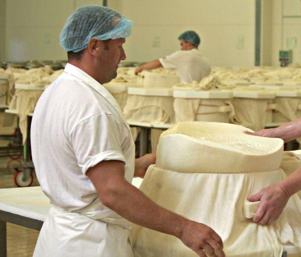 půlení sýra a vkládání do plastových forem